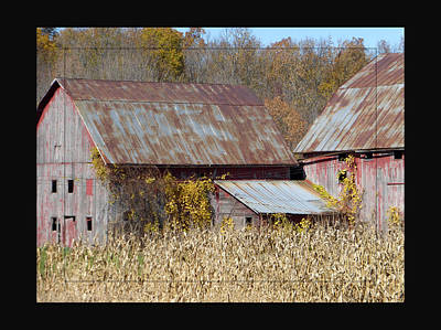 Triplet Barns Poster by Tina M Wenger