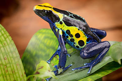 Tropical Poison Dart Frog Poster by Dirk Ercken