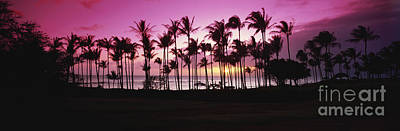 Tropical Sunset With Magenta Sky Poster by Bill Schildge