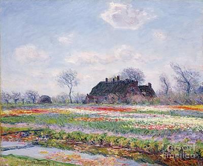 Tulip Fields At Sassenheim Poster by Claude Monet