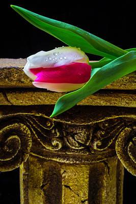Tulip Resting On Pillar Poster by Garry Gay