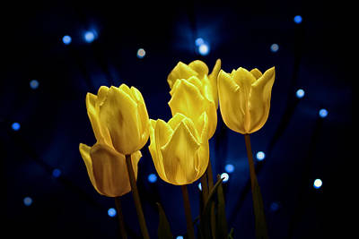 Tulip Twinkle Poster by Tom Mc Nemar