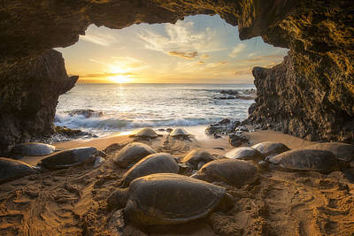 Turtle Cave Poster by Hawaii Fine Art Photography
