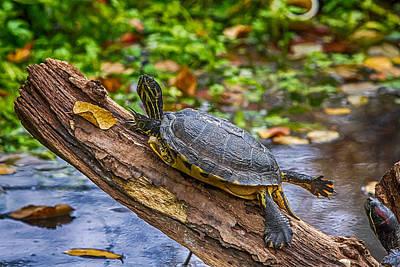 Turtle Yoga Poster by John Haldane