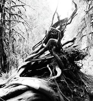 Twisted Tree Trunk In Hoh Rainforest Poster by Dan Sproul