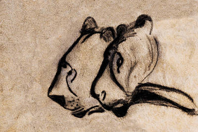 Two Chauvet Cave Lions - Clear Version Poster by Weston Westmoreland