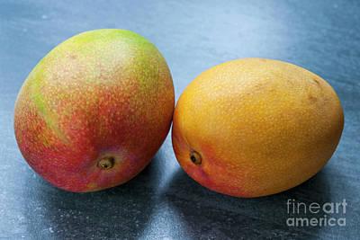 Two Mangos Poster by Elena Elisseeva
