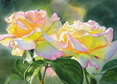 Two Peace Rose Blossoms Poster by Sharon Freeman