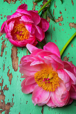 Two Peony's Poster by Garry Gay