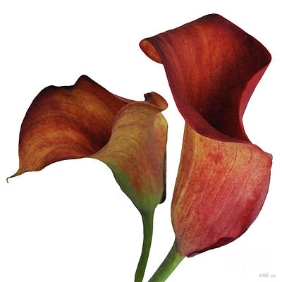 Two Rust Calla Lilies Square Poster by Heather Kirk