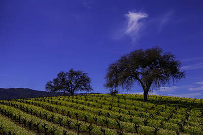 Two Trees In Vineyard Poster by Garry Gay