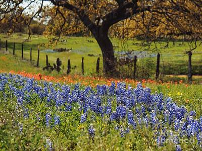 Tx Tradition, Bluebonnets Poster by Lisa Spencer