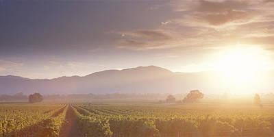 Usa, California, Napa Valley, Vineyard Poster by Panoramic Images