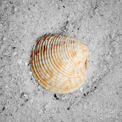 Vibrant Orange Ribbed Sea Shell In Fine Wet Sand Macro Square Format Color Splash Black And White Poster by Shawn O'Brien