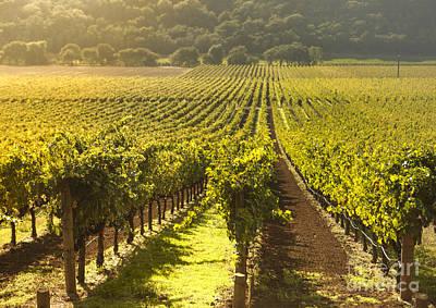 Vineyard In Napa Valley Poster by Diane Diederich