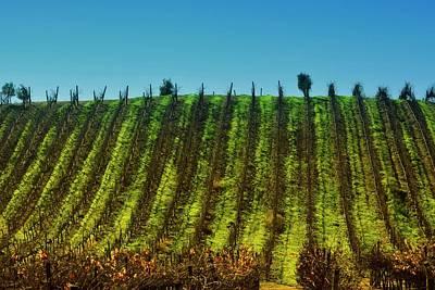 Vineyard In Tapihue 2 Poster by Fernando Lopez Lago