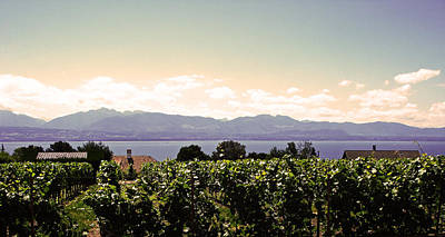 Vineyard On Lake Geneva Poster by Jeff Barrett