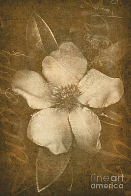 Vintage Postcard Flower Poster by Jorgo Photography - Wall Art Gallery