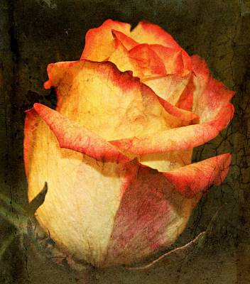 Vintage Rose Poster by Cathie Tyler