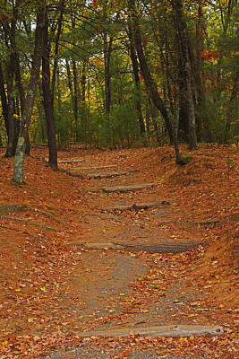 Walden Pond Path Into The Forest Poster by Toby McGuire