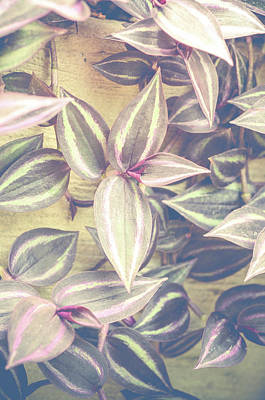 Wandering Jew Poster by Joy StClaire