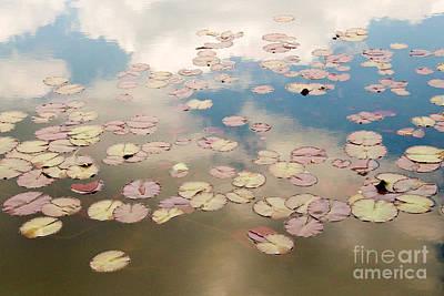 Water Lilies In Schoenbrunn Vienna Austria Poster by Julia Hiebaum