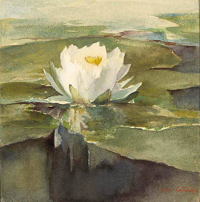 Water Lily In Sunlight Poster by Celestial Images