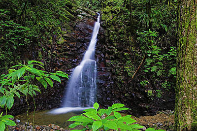 Waterfall-1-st Lucia Poster by Chester Williams