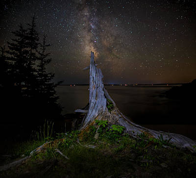 Weathered Stump Under The Stars Poster by Brent L Ander