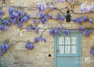 Weaving Wisteria Poster by Tim Gainey