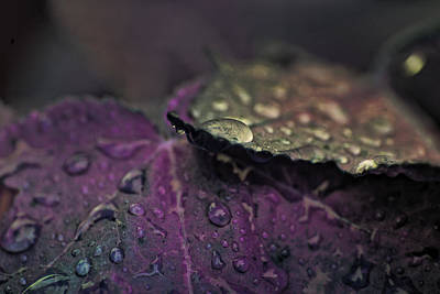 Wet Purple Leaves Poster by Bonnie Bruno