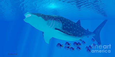 Whale Shark Feeding Poster by Corey Ford