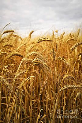 Wheat Poster by Elena Elisseeva