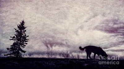 When Night Closes In Poster by Priska Wettstein