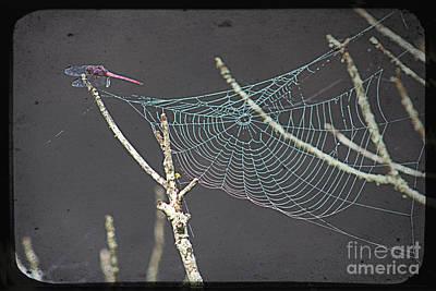 Where Do Dragonflies Sleep Poster by Ella Kaye Dickey