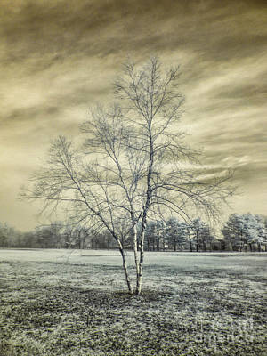 White Birch In Cantiague Park Poster by Jeff Breiman
