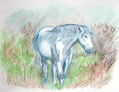 White New Forest Pony Sketch Poster by Paul Cummings