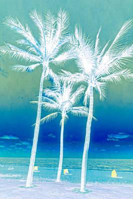 White Palms Poster by Debra and Dave Vanderlaan