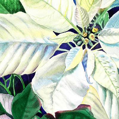 White Poinsettia Plant Poster by Irina Sztukowski