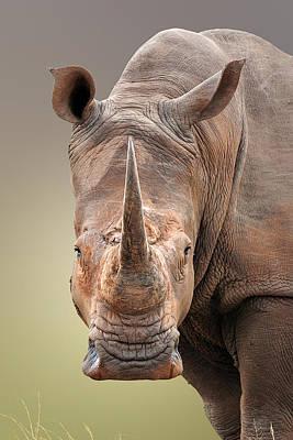White Rhinoceros Portrait Poster by Johan Swanepoel