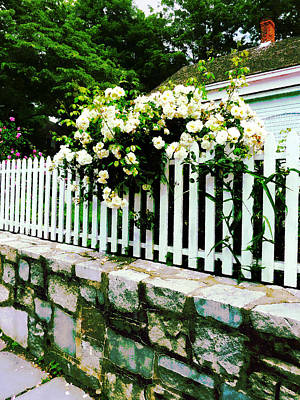 White Roses On A Picket Fence Poster by Susan Savad