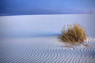 White Sands Scrub Poster by Peter Tellone