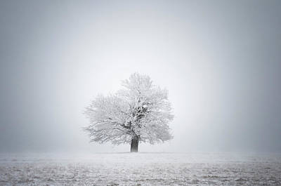 White Solitude And Light Poster by Janek Sedlar