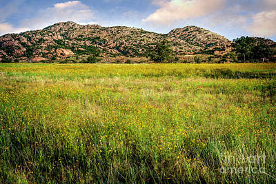 Wichita Mountain Wildflowers Poster by Tamyra Ayles