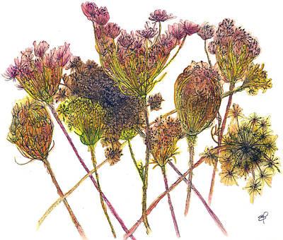 Wild Carrot Poster by Elizabeth Thorstenson