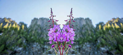 Wild Flower Reflection Poster by Pelo Blanco Photo