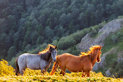 Wild Horses Poster by Evgeni Dinev