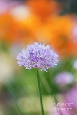 Wild Onion Flower Poster by Tim Gainey