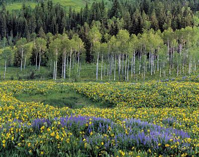 Wildflower Meadow Poster by Leland D Howard