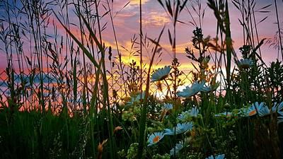 Wildflower Sunset  Poster by Jenn Teel